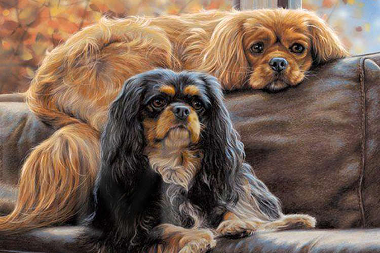 Toy Dogs Dog Art Gallery