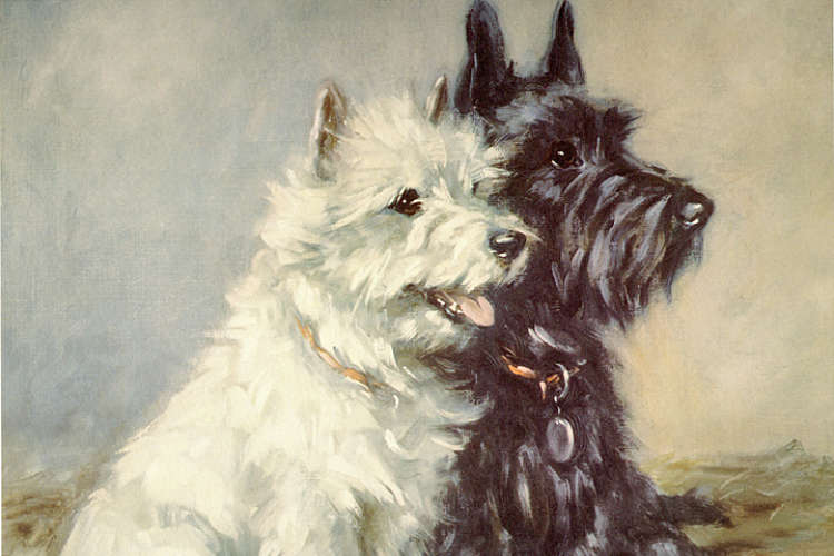 Terrier Dog Art Gallery